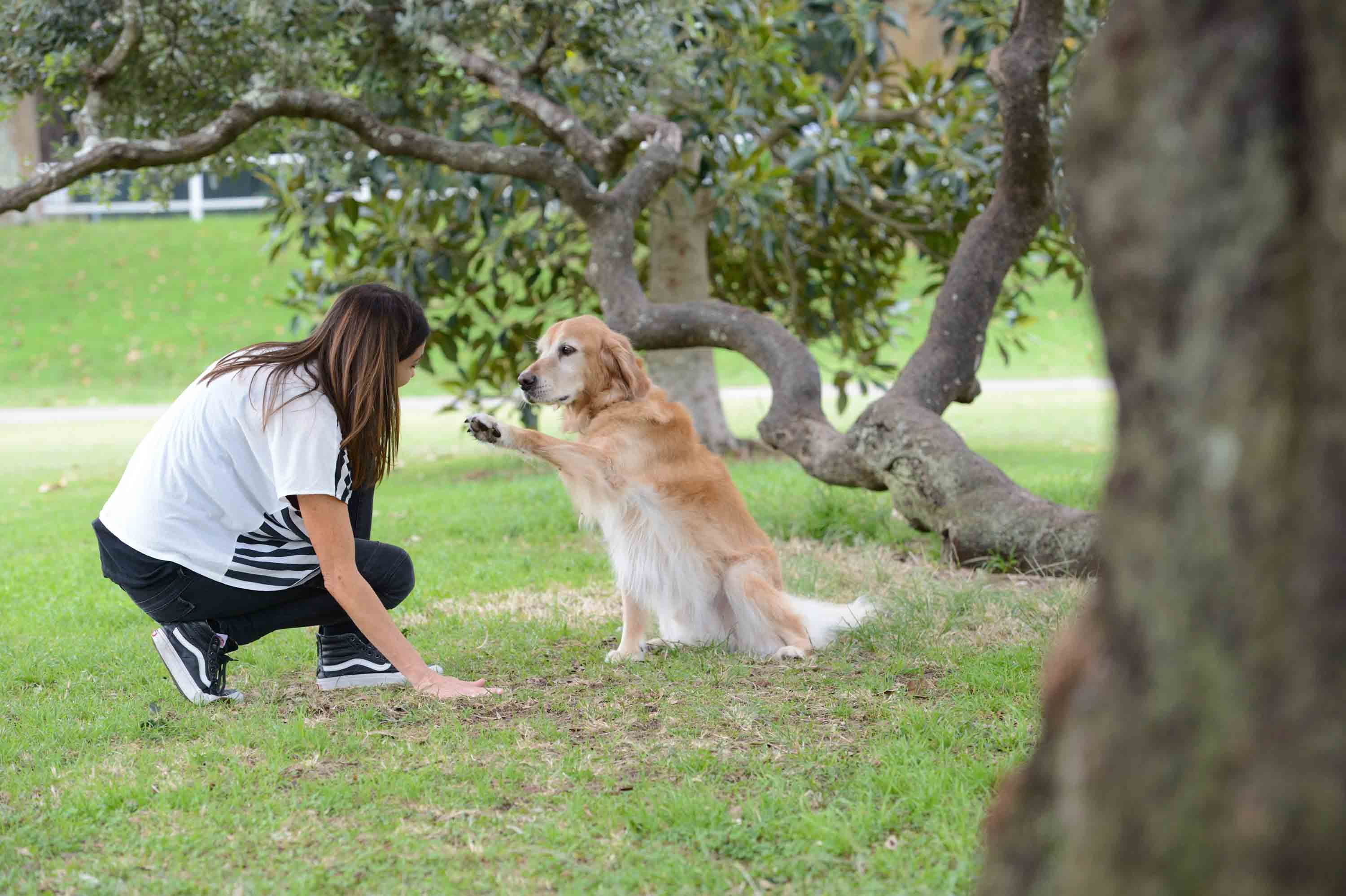 dr katrina warren dog training tips